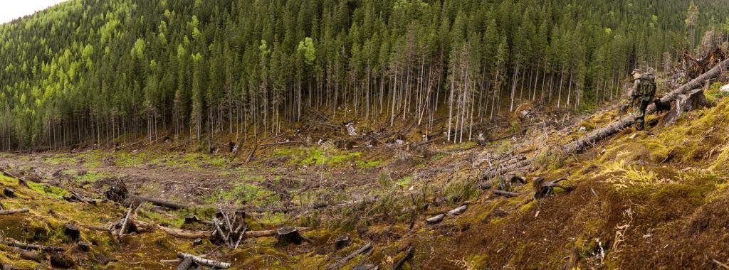 En esta imagen aparece un bosque talado, representa la deforestación